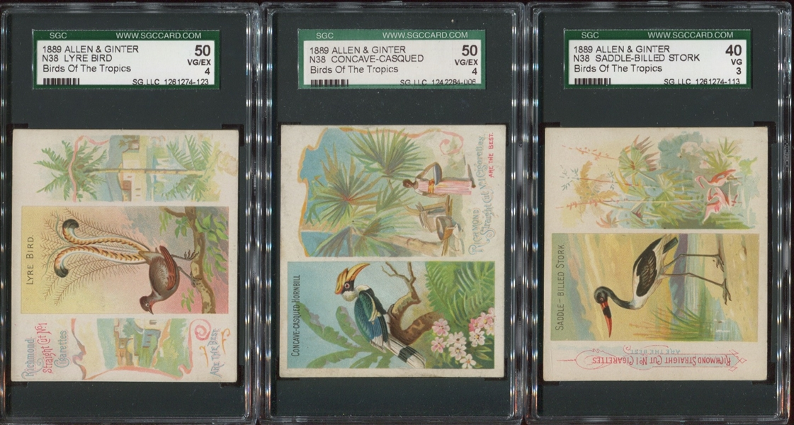 Lot of (6) N38 Allen & Ginter Birds of the Tropics Cards