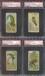 N5 Birds of the Tropics Lot of (4) PSA4 Graded Cards