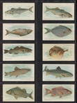 N8 Allen & Ginter Fish From American Waters Lot of (28) Cards