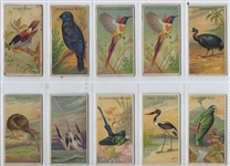 N5 Allen & Ginter Birds of the Tropics Lot of (21) Cards