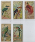 N5 Allen & Ginter Birds of the Tropics Lot of (5) Cards