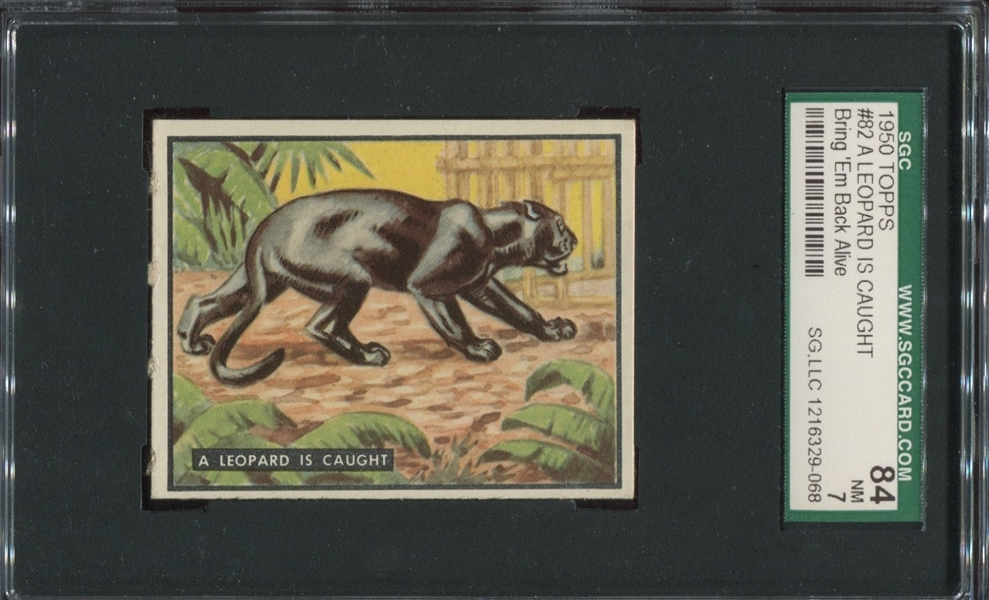 1950 Topps Bring 'Em Back Alive #82 A Leopard is Caught SGC84 NM