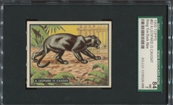 1950 Topps Bring Em Back Alive #82 A Leopard is Caught SGC84 NM