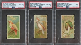 N5 Allen & Ginter Birds of the Tropics Lot of (3) PSA-Graded Cards