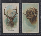N-UNC Old Judge Wild Animals of the World (Like N25 A&G) Lot of (2) TOUGH Cards