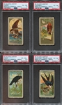 N4 Allen & Ginter Birds of America Lot of (4) PSA-Graded Cards