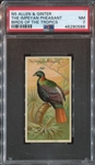 N5 Allen & Ginter Birds of the Tropics The Impeyan Pheasant PSA7 NM