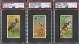 N5 Allen & Ginter Birds of the Tropics Lot of (3) PSA6-Graded Cards